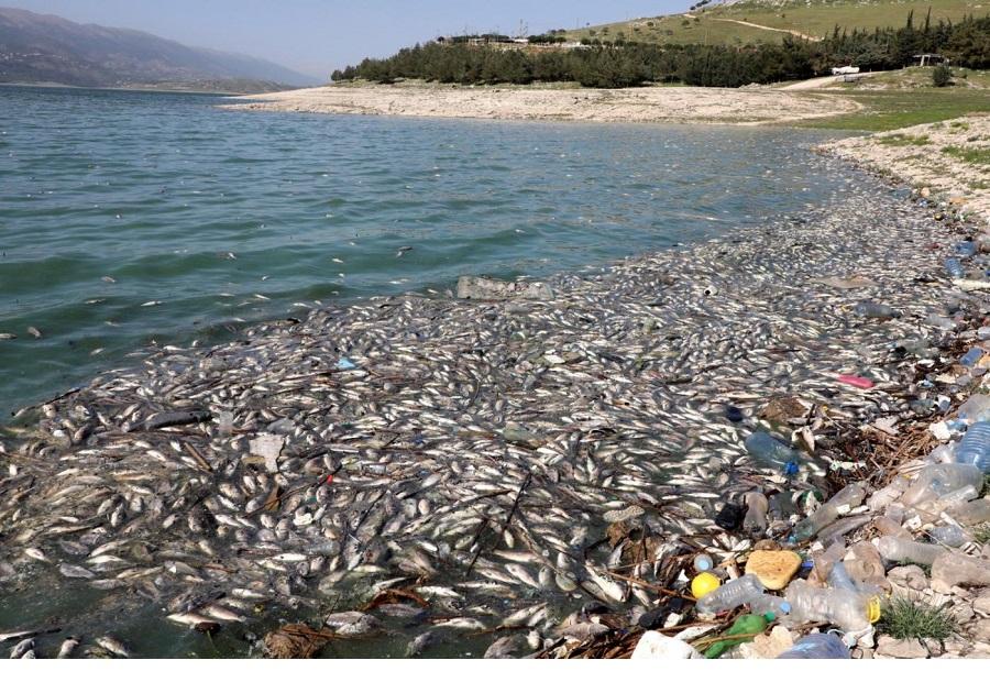 """אסון חדש נפל על """"לבנון"""": מי רצח את הדגים? חיזבאללה?"""